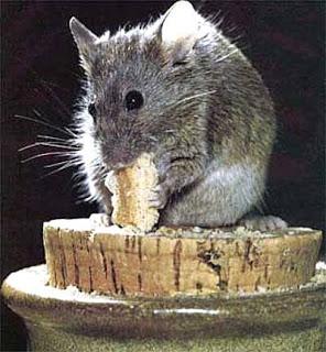 Los animales de poder despierta cordoba radio todos - Comida para ratones ...