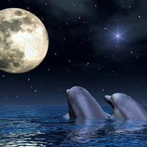 delfines-enamorados (1)
