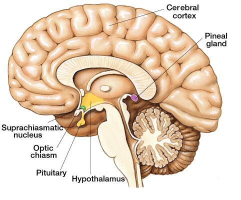 pineal-gland-et-on-earth