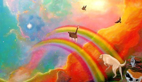 animales-arcoiris-497x290