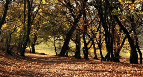 portada-bosque-hoia-baciu