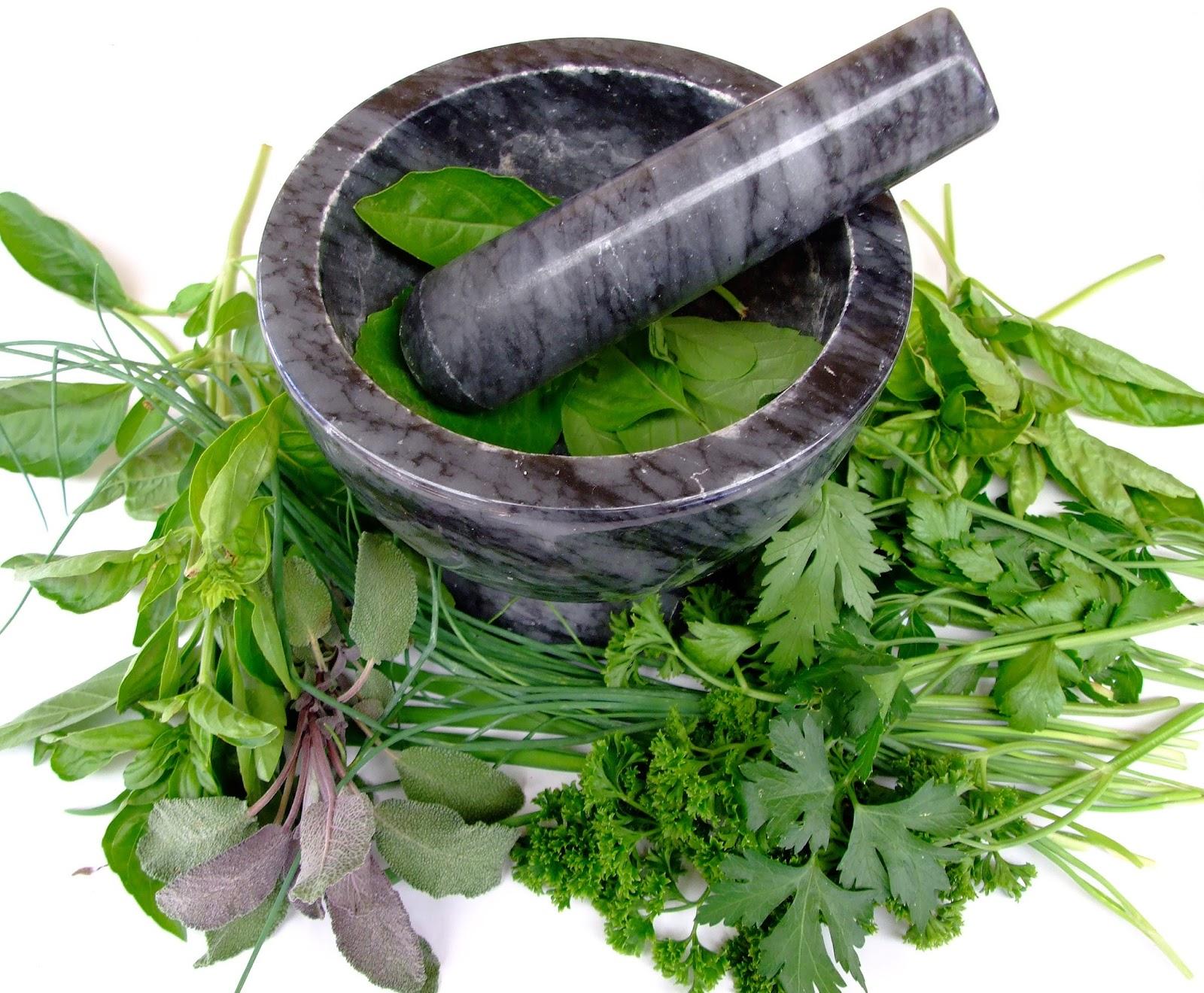 plantas medicinales para eyaculacion precoz tratamiento